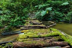 Houten brug bij de sleep van de angkaaard in doi inthanon nationaal park, Thailand stock foto's