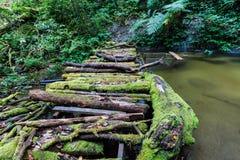 Houten brug bij de sleep van de angkaaard in doi inthanon nationaal park, Thailand royalty-vrije stock foto's
