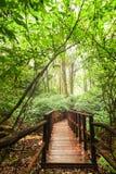Houten brug bij het nevelige tropische Park van regenwouddoi Inthanon, Thailand royalty-vrije stock foto's