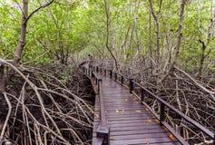 Houten brug de bosmangrove in Petchaburi, Thailand royalty-vrije stock afbeeldingen