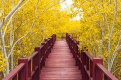houten brug & de herfstbos Stock Afbeeldingen