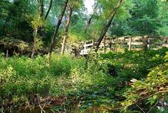 Houten brug in de zomerbos die een moeras en een stroom kruisen Royalty-vrije Stock Foto's