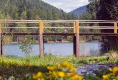 Houten brug door bergmeer Synevyr in een pijnboombos royalty-vrije stock afbeeldingen