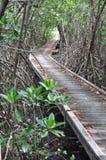 Houten brug door de mangroveherbebossing in Petchaburi stock foto