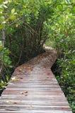 Houten brug door de mangroveherbebossing in Petchaburi stock afbeeldingen