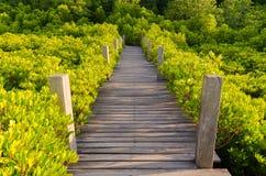 Houten brug en mangrovegebied Royalty-vrije Stock Foto's