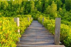 Houten brug en mangrovegebied Stock Afbeelding