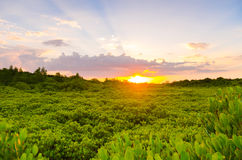 Houten brug en mangrovegebied Royalty-vrije Stock Afbeelding