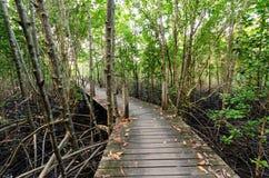 Houten brug en mangrovegebied Stock Foto