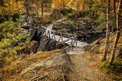 Houten brug in het bos Royalty-vrije Stock Afbeelding