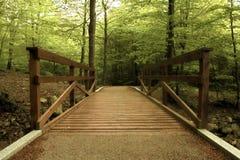Houten brug in het groene bos Stock Foto