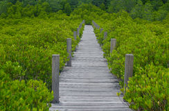 Houten brug langs mangrovebos Royalty-vrije Stock Foto's