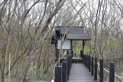 Houten brug in mangrovebos royalty-vrije stock afbeeldingen