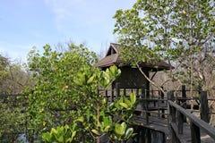 Houten brug in mangrovebos Stock Afbeeldingen