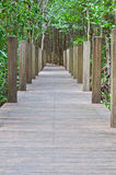 Houten brug in mangrovebos Royalty-vrije Stock Fotografie