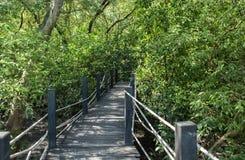 Houten brug in mangrovebos Stock Afbeelding