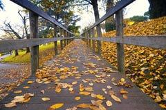 Houten brug met de herfstbladeren Royalty-vrije Stock Foto