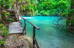 Houten brug naast moeras Stock Foto