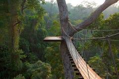 Houten brug op boom in wildernis Stock Afbeeldingen
