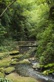 Houten brug over de rivier Stock Foto