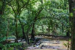 Houten brug over een stormachtige kreek in wildernis Phuket, Thailand stock foto's