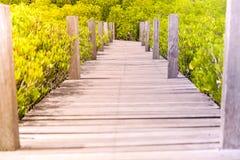 Houten brug in Tung Prong Thong/Mangrove in de Aarddomein van Thailand Royalty-vrije Stock Afbeelding