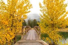 Houten brug tussen twee gele bomen van de de herfstpijnboom en nevelige lucht van berg op achtergrond bij Cascadevijver, het Nati stock afbeeldingen
