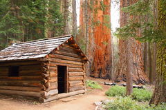 Houten cabine in sequoiabos royalty-vrije stock foto's