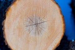 Houten cirkel Stock Foto's