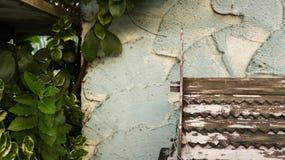 Houten Dakpatroon met Schil Witte Verf op Ruwe Geschilderde Te stock foto's