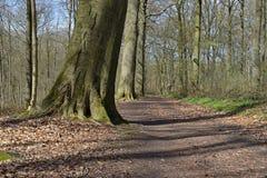 Houten de boomlandschap van de weg bossleep Stock Foto's