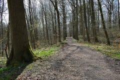 Houten de boomlandschap van de weg bossleep Stock Afbeelding
