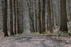 Houten de boomlandschap van de weg bossleep Royalty-vrije Stock Afbeelding