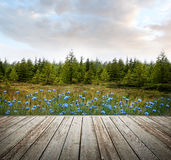 Houten dek met bosbomen en bloemen Royalty-vrije Stock Foto