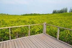 Houten die balkon met het gebied van Ceriops Tagal in mangrove F wordt omringd Royalty-vrije Stock Afbeelding