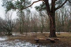 Houten die bank van logboek onder de boom bij de wintergebied wordt gemaakt Royalty-vrije Stock Afbeeldingen