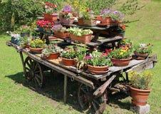 houten die blokkenwagen met vele potten van bloemen in de weide wordt verfraaid Royalty-vrije Stock Foto's