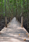 Houten die gangbrug in mangrovebos in Thaise Rayong wordt gevestigd, Royalty-vrije Stock Foto's