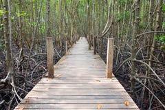 Houten die gangbrug in mangrovebos in Thaise Rayong wordt gevestigd, Stock Foto's