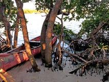 Houten die het roeien boot in de struiken op de kust wordt vastgelegd royalty-vrije stock foto's