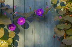 Houten die oppervlakte als achtergrond met bloemen wordt overwoekerd Stock Afbeelding