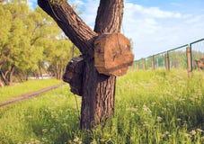 Houten doel twee op een boom Stock Fotografie