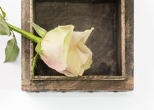 Houten doos met bloem Stock Afbeeldingen