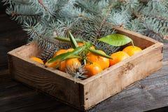 Houten doos met mandarijnen Stock Foto