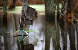 Houten Duck Box Reflection Royalty-vrije Stock Fotografie