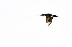 Houten Duck Flying op een Witte Achtergrond stock afbeeldingen