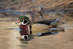 Houten Duck Pair Stock Afbeelding