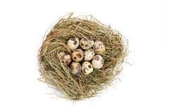 Houten eieren Stock Foto