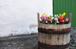 Houten emmer met de lentebloemen voor de oude bouw stock afbeeldingen