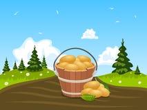 Houten emmerhoogtepunt van geoogste aardappels Stock Foto's